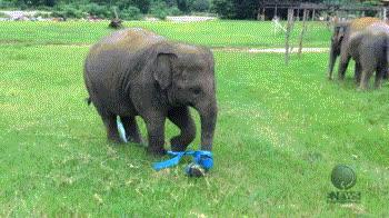 🐘 elephant GIFs