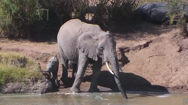 Watch Mom and baby elephant at Watering Hole. Africa Animals cam. 31 January 2018 GIF by PM_ME_STEAM_K3YS (@pmmesteamk3ys) on Gfycat. Discover more Baby elephant, elephant GIFs on Gfycat