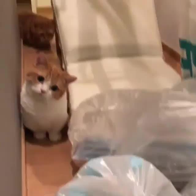 cat, cats, cute, kitten, kitty, Video by 9gag GIFs