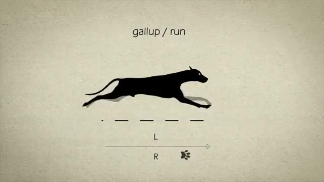 Watch gallup/run GIF on Gfycat. Discover more educationalgifs GIFs on Gfycat
