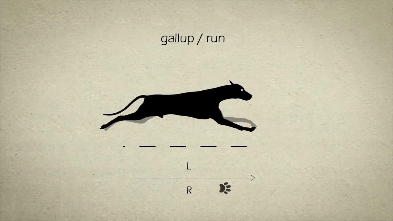 educationalgifs, gallup/run GIFs