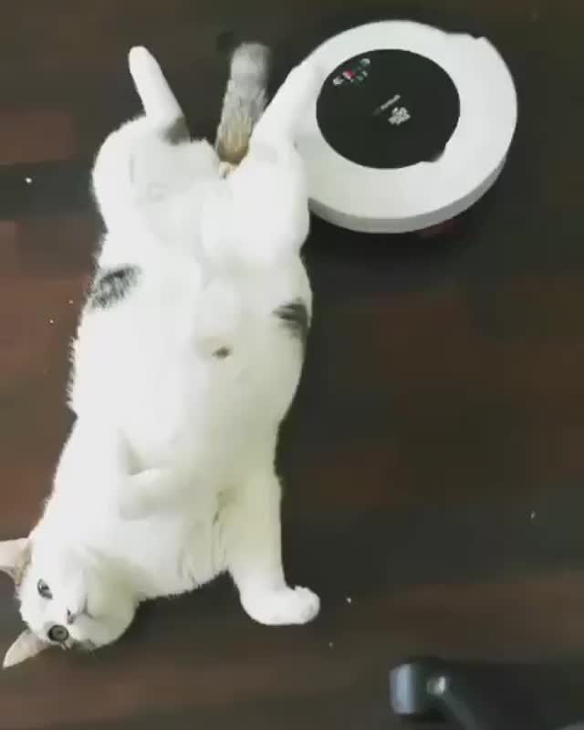 Watch and share Meowed By 9gag GIFs and Roomba GIFs by vani  on Gfycat