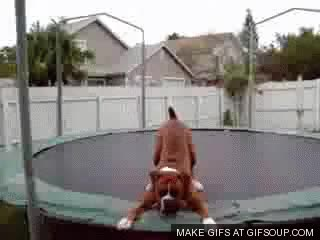 Watch ff boxer on trampoline GIF on Gfycat. Discover more related GIFs on Gfycat