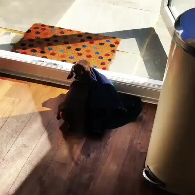 When mom says you can take your blankie to the picnic. (reddit) GIFs