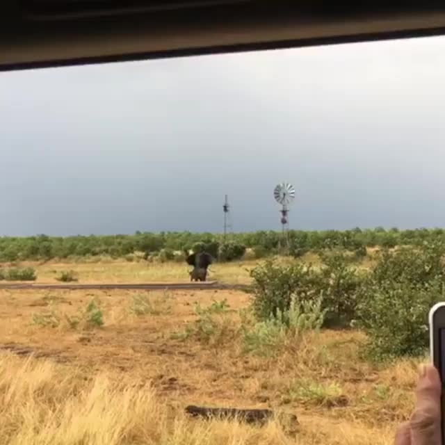 Watch and share 🔥 Elephant Has No Clue What To Do When It Gets Charged By A Baby Water Buffalo 🔥 GIFs by wj7_02 on Gfycat