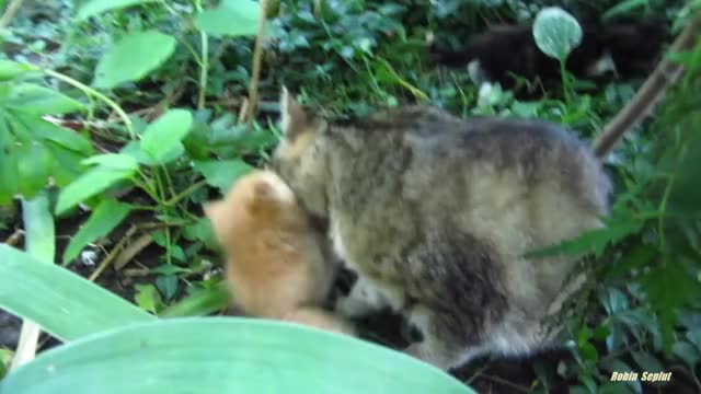 Watch and share Cat Videos GIFs and Mother Cat GIFs by LittleRiver-Skipper on Gfycat