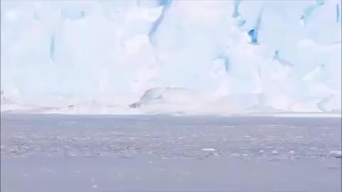 penguins, penguins, cute, funny, Penguin march GIFs