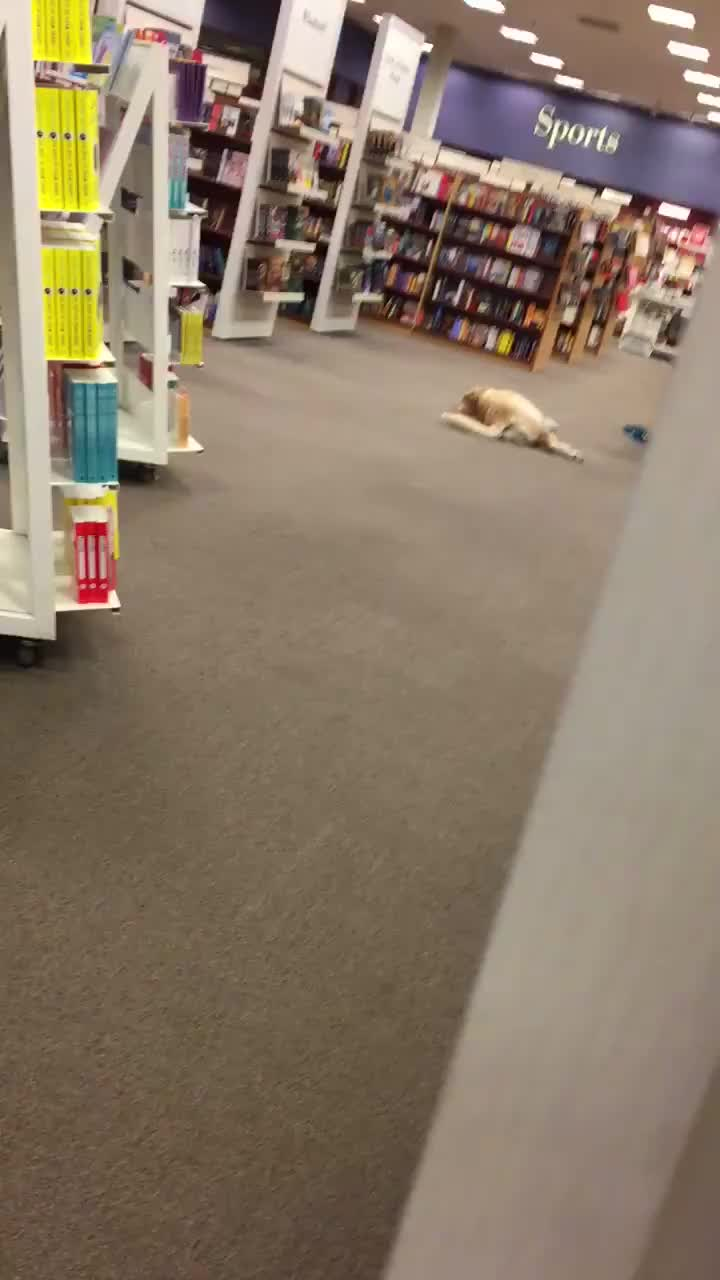 StoppedWorking, popular, BREAKING: Good boy stopped working in library (reddit) GIFs