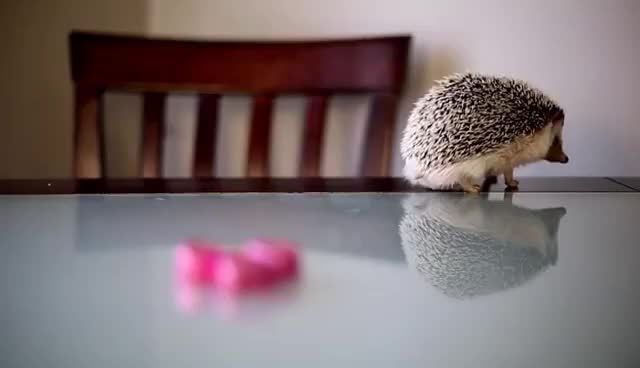 Watch Forever alone GIF on Gfycat. Discover more for ever alone hedgehog GIFs on Gfycat