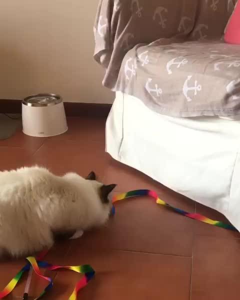 peering cat GIFs