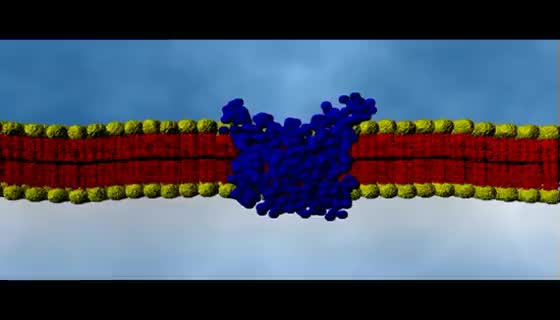 Watch and share Cell Membrane Passive Transport | Cell Biology GIFs on Gfycat