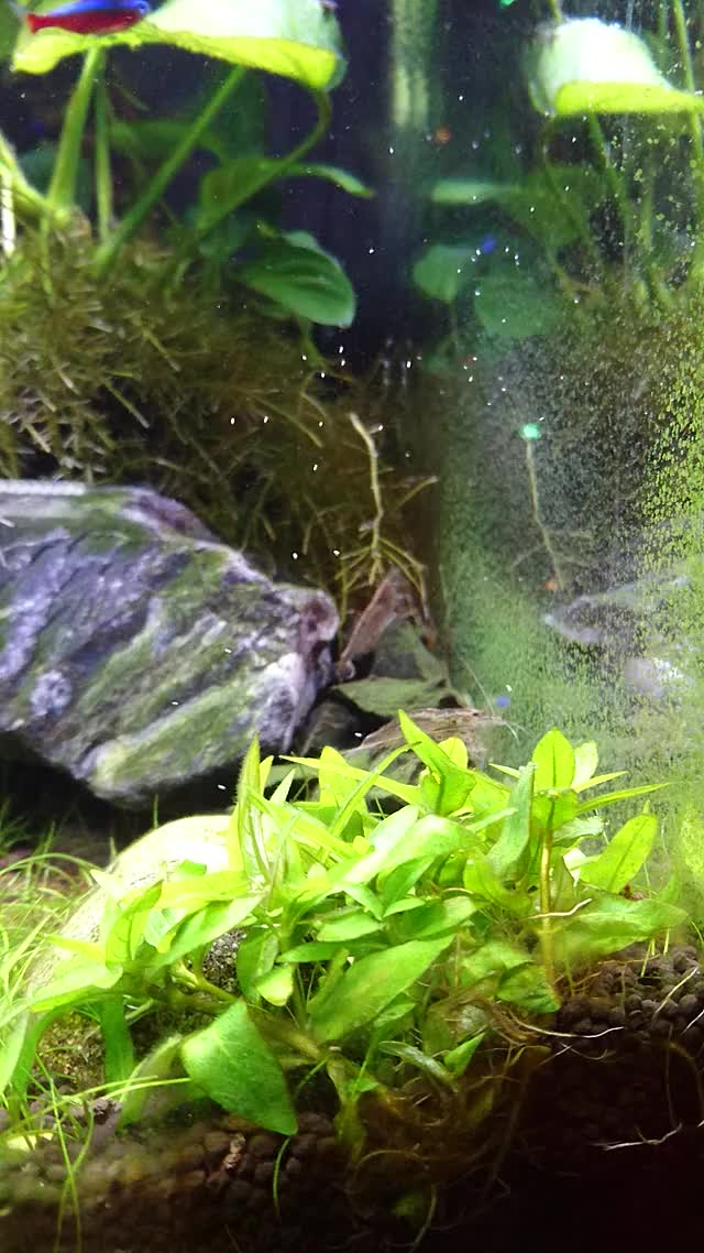 Watch and share Plantedtank GIFs and Aquarium GIFs on Gfycat