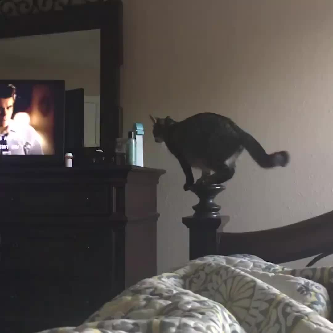 cat misses jump, Kitty miscalulates jump...😂 GIFs