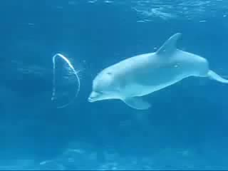 Watch and share Aquatic GIFs and Dolphin GIFs by nsfcom on Gfycat