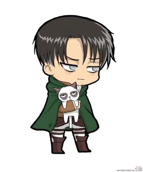 Watch this grumpy cat GIF on Gfycat. Discover more attack on titan, cat, grumpy, grumpy cat, levi, shingeki no kyojin, snk GIFs on Gfycat