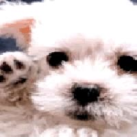 Watch and share Waving Puppy GIFs on Gfycat