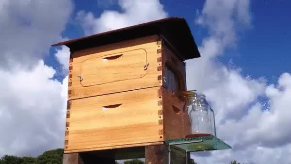 Beekeepers. Why Must They Always Fight? GIFs