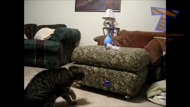 Watch and share Cattaps GIFs on Gfycat