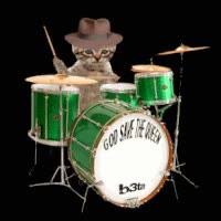 Watch Kitty cat drummer animated gif GIF on Gfycat. Discover more related GIFs on Gfycat