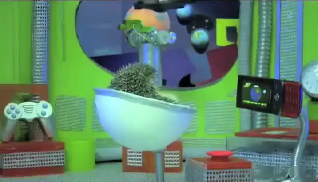 Watch and share Hedgehog GIFs on Gfycat