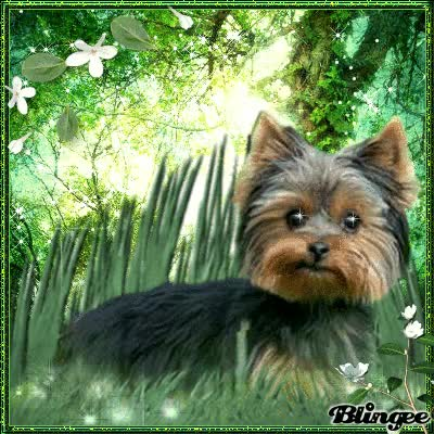 Watch and share Yorkie In Spring Meadow GIFs on Gfycat