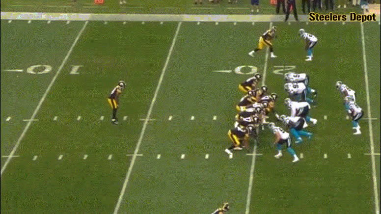 banner-panthers-1 GIFs