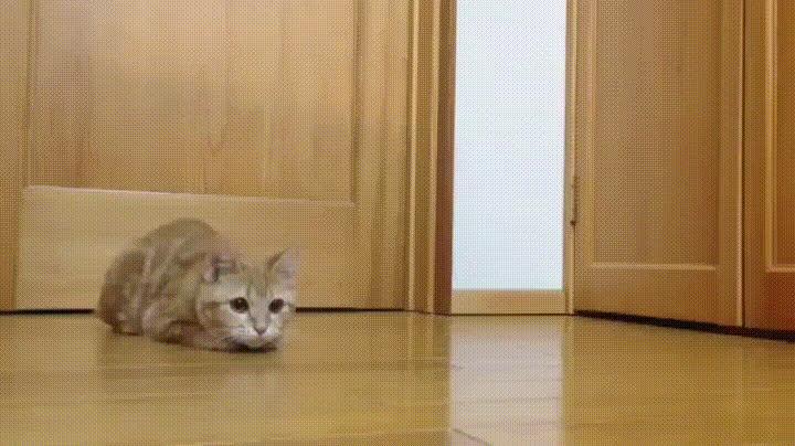 goalkeeper cat GIFs