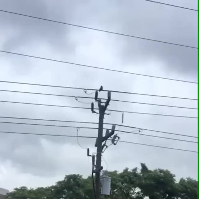 Watch and share Squirrels Playing On The Wires GIFs by KSG on Gfycat