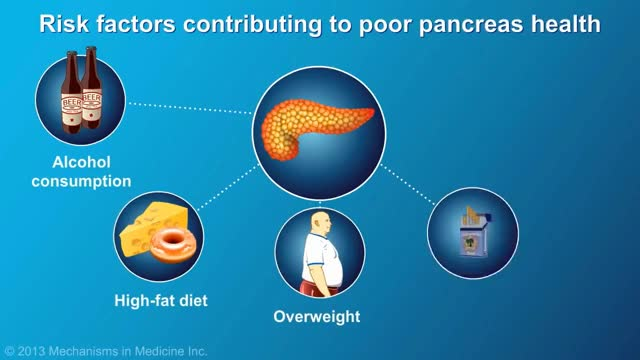 Watch and share The Role And Anatomy Of The Pancreas GIFs on Gfycat