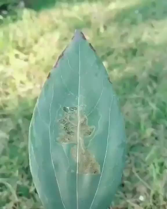 Watch and share Leaves GIFs and Leaf GIFs by tothetenthpower on Gfycat