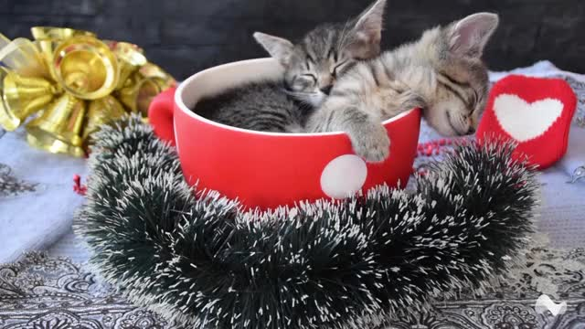 Watch and share Kittens GIFs and Cats GIFs by Moodica on Gfycat