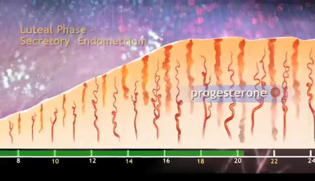 Watch and share Ovulation & The Menstrual Cycle - Narrated 3D Animation GIFs on Gfycat