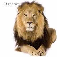 Watch Gentil lion GIF on Gfycat. Discover more related GIFs on Gfycat