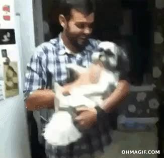 Bang! [x-post from /r/AnimalsBeingBros] : gifs GIFs
