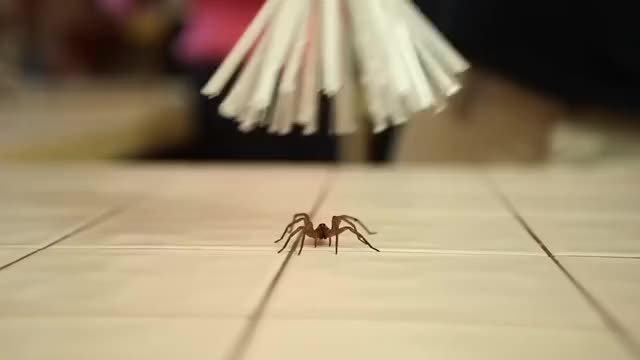 Watch Spider Catcher GIF by @skydiver on Gfycat. Discover more INSIDER, Science & Technology, catcher, creepy, critter, spider GIFs on Gfycat