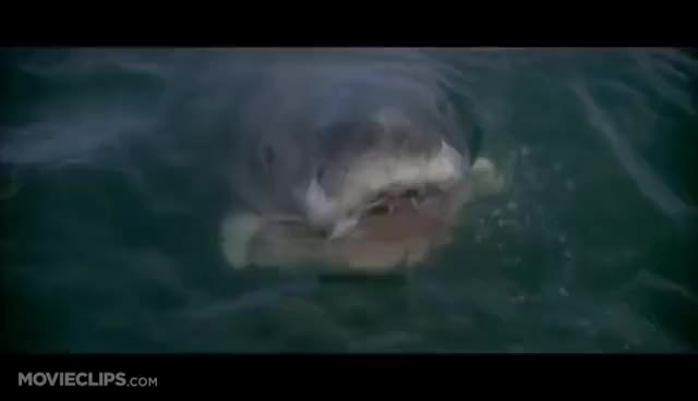 Watch Orca GIF on Gfycat. Discover more Jaws, shark attack GIFs on Gfycat