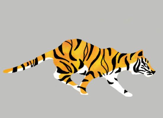 animal, animals, cat, tiger, tigress, tiger GIFs
