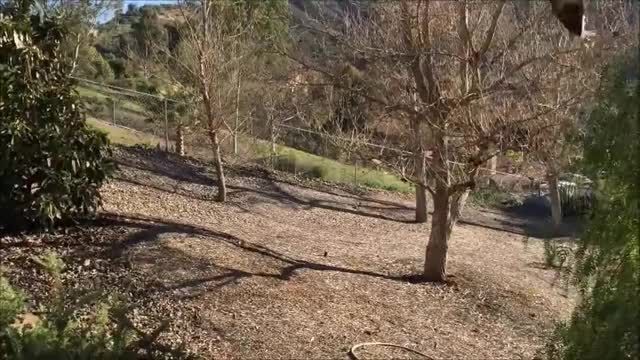 Watch and share Hawk And Snake Fight Over A Rabbit GIFs on Gfycat