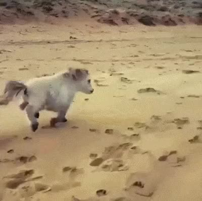Watch and share Miniature Horse GIFs on Gfycat