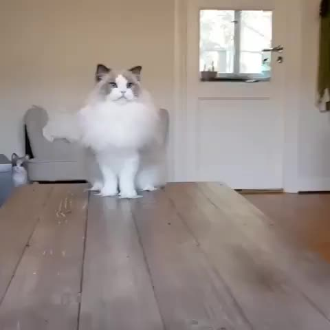 Watch and share Catfriendly GIFs and Catobsessed GIFs by vani  on Gfycat