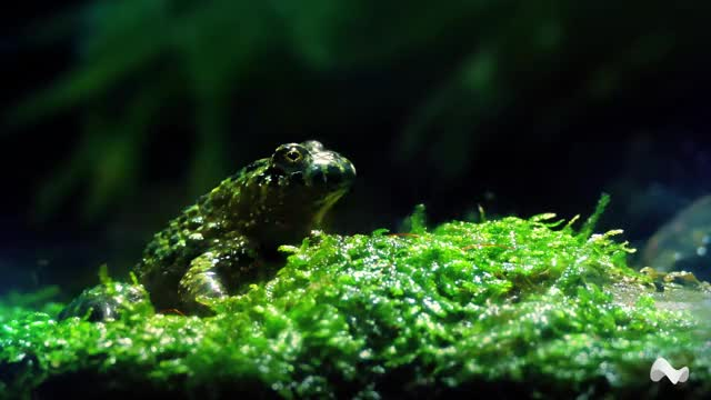 Watch and share Rainforest Frog GIFs by Moodica on Gfycat