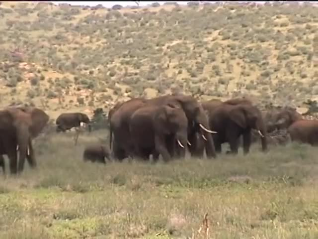 Watch Kenya Elephant GIF on Gfycat. Discover more Africa, Kenya, adventure, animals, beautiful, birds, conservation, documentary, elephants, funny, herd, landscapes, nature, playing, rhinos, safari, scenic, travel, wildlife GIFs on Gfycat