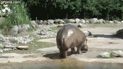 Watch and share Hippo GIFs on Gfycat