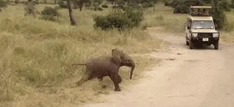 Watch this elephant GIF on Gfycat. Discover more animals, elephant, zoo GIFs on Gfycat
