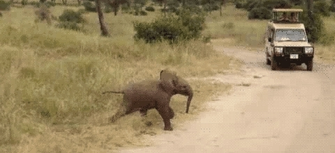 animals, elephant, zoo, Elephant GIFs