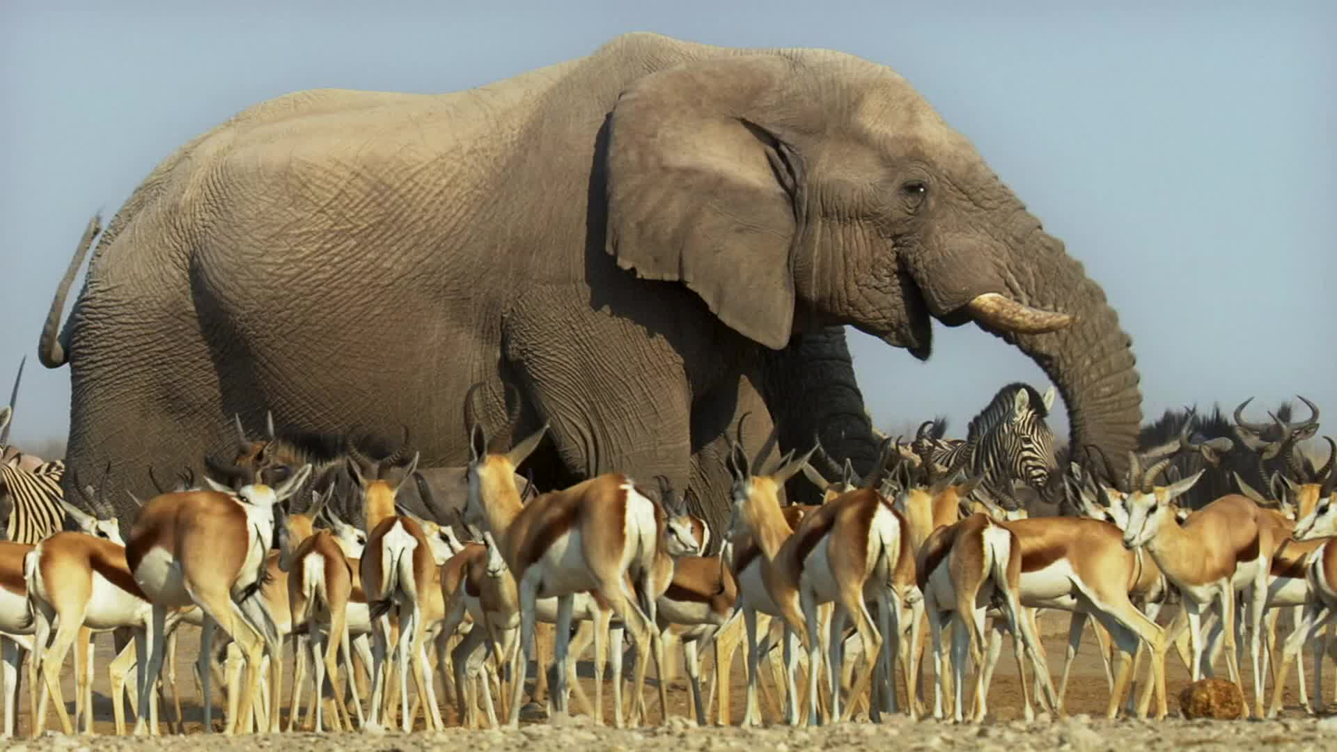 elephant GIFs
