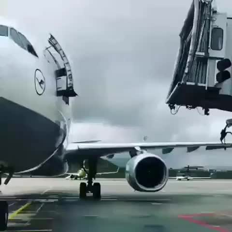 Watch and share Catch Flight GIFs by saleh on Gfycat