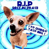Watch and share GC Taco Bell Chihuahua RIP GIFs on Gfycat