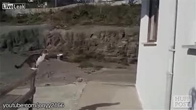 Watch cat roof jump fail  GIF on Gfycat. Discover more related GIFs on Gfycat