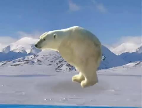 Watch and share Retarded Running Polar Bear GIFs on Gfycat